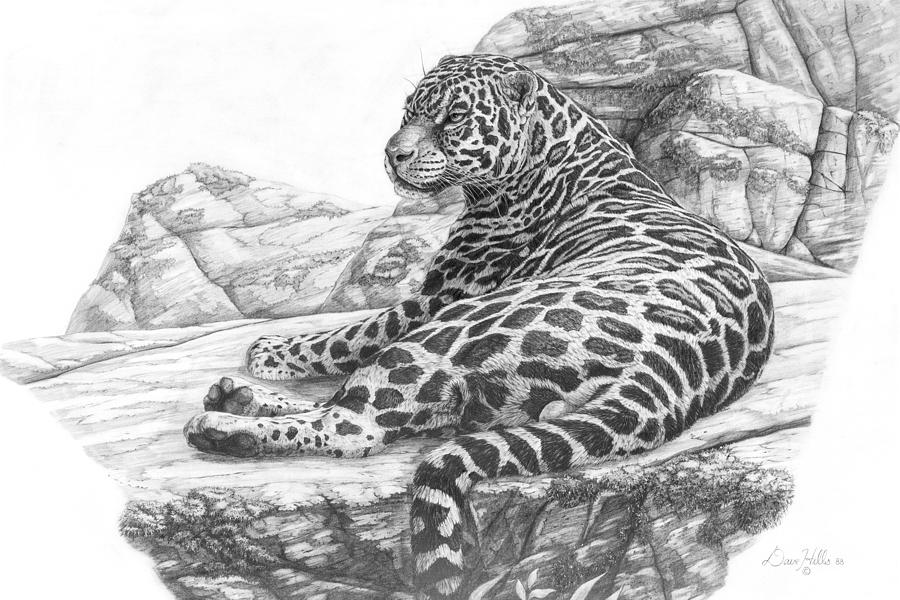 Jaguar Relaxing Painting By Dave Hills