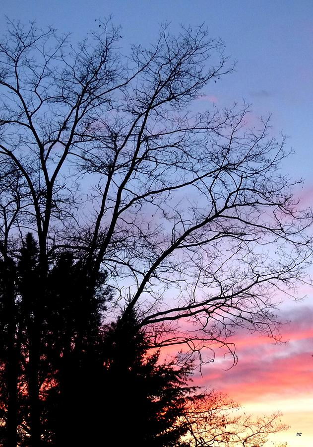 January Photograph - January Silhouette by Will Borden