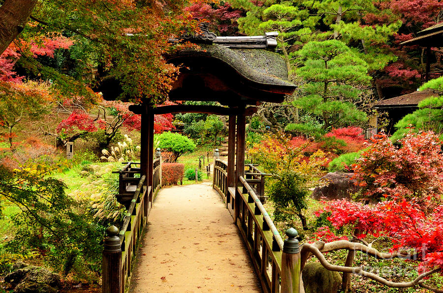 Landscapes Photograph - Japanese Garden In Autumn 7 by Dean Harte