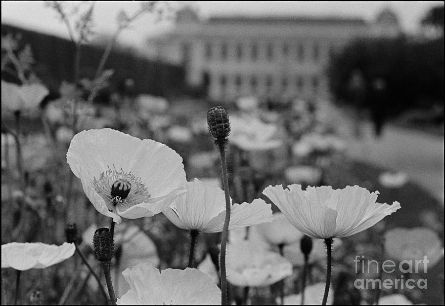 Floral Photograph - Jardins des Plantes Paris by Aldo Cervato