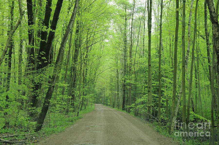 Green Photograph - Jasper Woods by Ronald Grogan