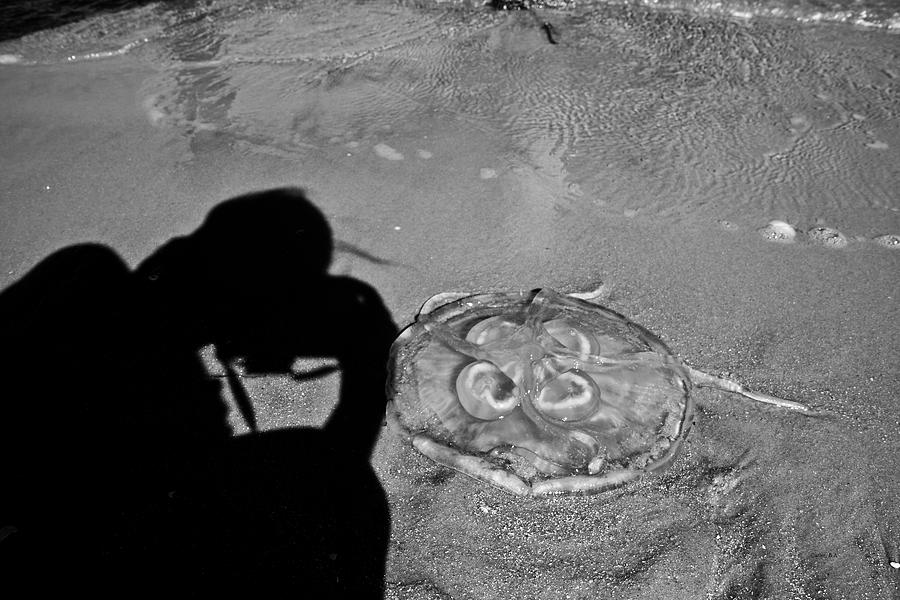Jellyfish Photograph - Jelly Capture by Betsy Knapp