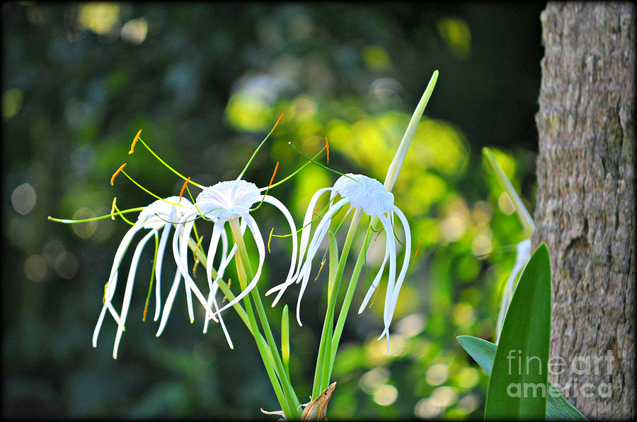 Flower Photograph - Jelly Fish Flowers by Laura Ogrodnik