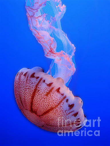 Jelly Photograph - Jelly by Morgan Wright