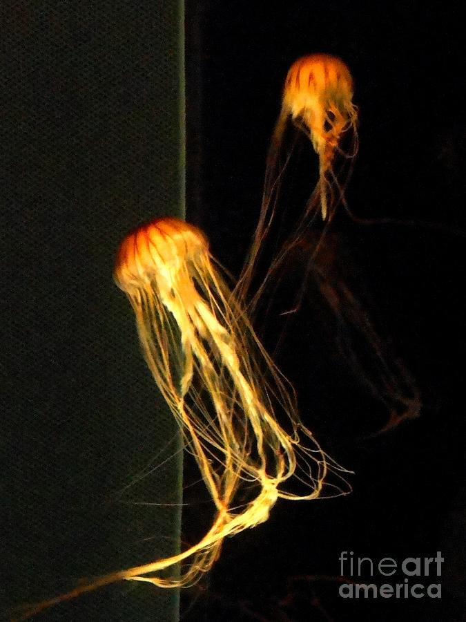 Jellies Photograph - Jellyfish In Dark by Meandering Photography