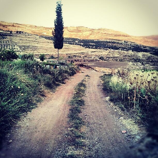 Instagram Photograph - #jo #jordan #amman #nature #green #road by Abdelrahman Alawwad