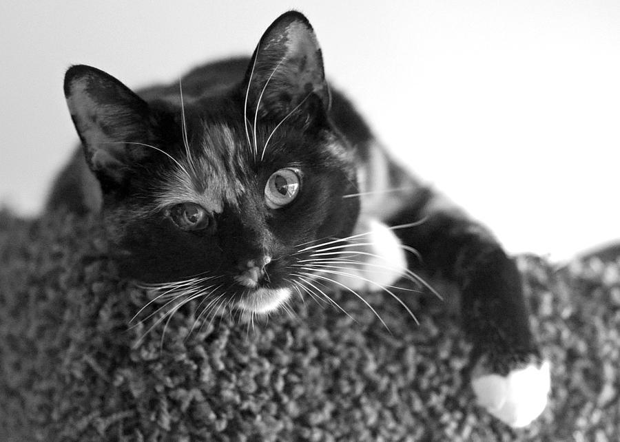 Animals Photograph - Jocko by Lisa Phillips
