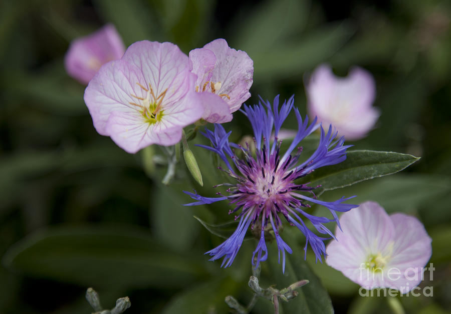 Floral Photograph - Joined by Amanda Barcon