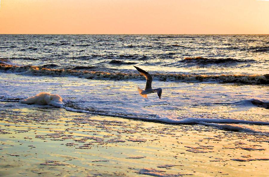 Seagull Photograph - Jonathan Livingston Seagull by Kristin Elmquist