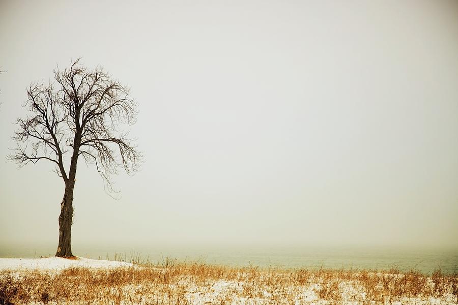 Canada Photograph - Jordan, Ontario, Canada A Tree Along by Pete Stec