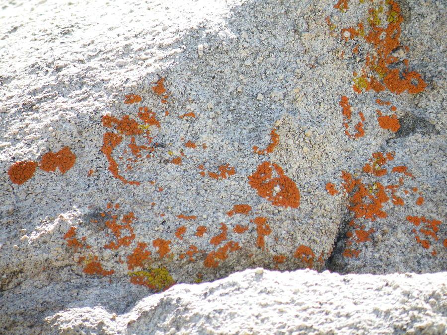 White Photograph - Joshua Tree Orange Lichen by Claire Plowman