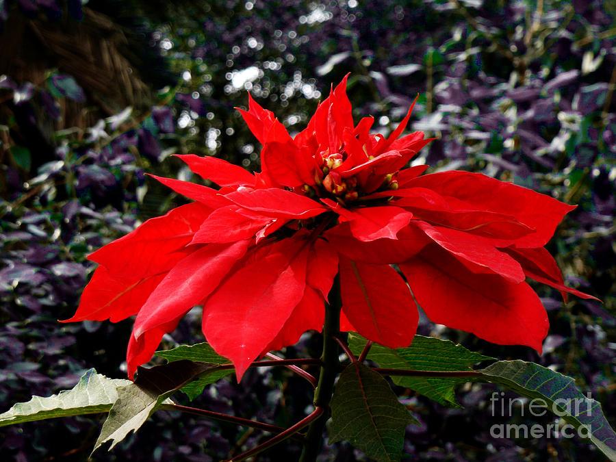 Christmas Photograph - Joy And Prosperity II by Xueling Zou