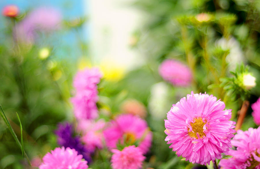 Nature Photograph - Joy Of Summer Time by Jenny Rainbow