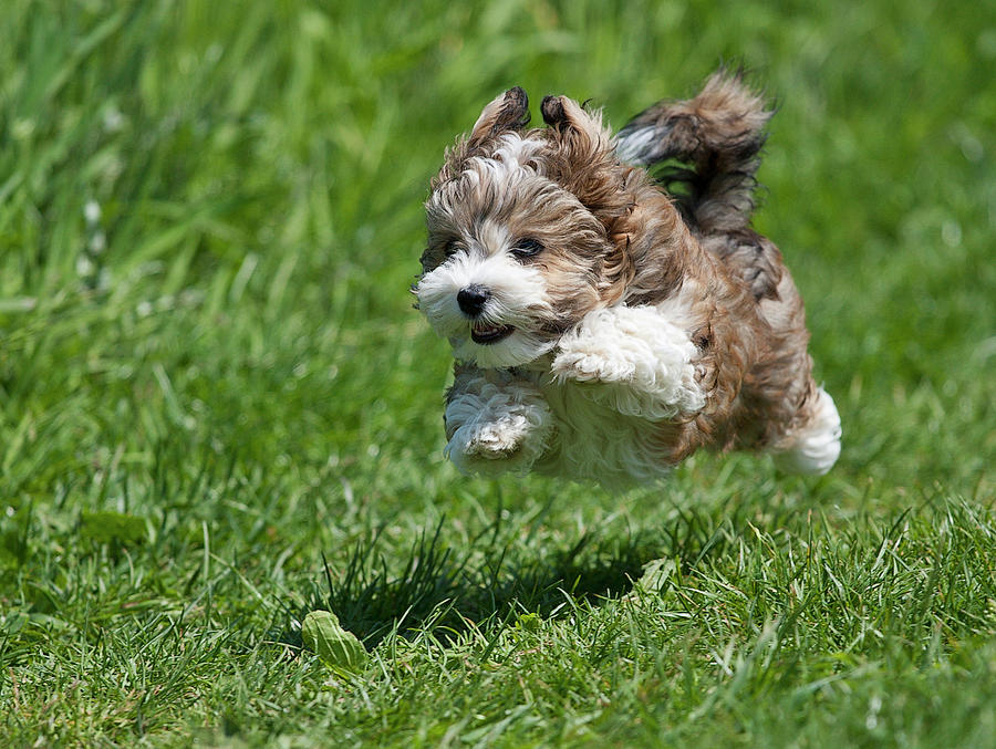 Horizontal Photograph - Jumping Puppy by @Hans Surfer