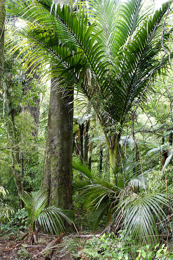 Trees Photograph - Jungle by Les Cunliffe