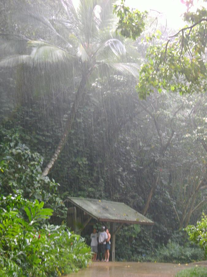 Jungle Rain Storm Photograph By Elaine Haakenson