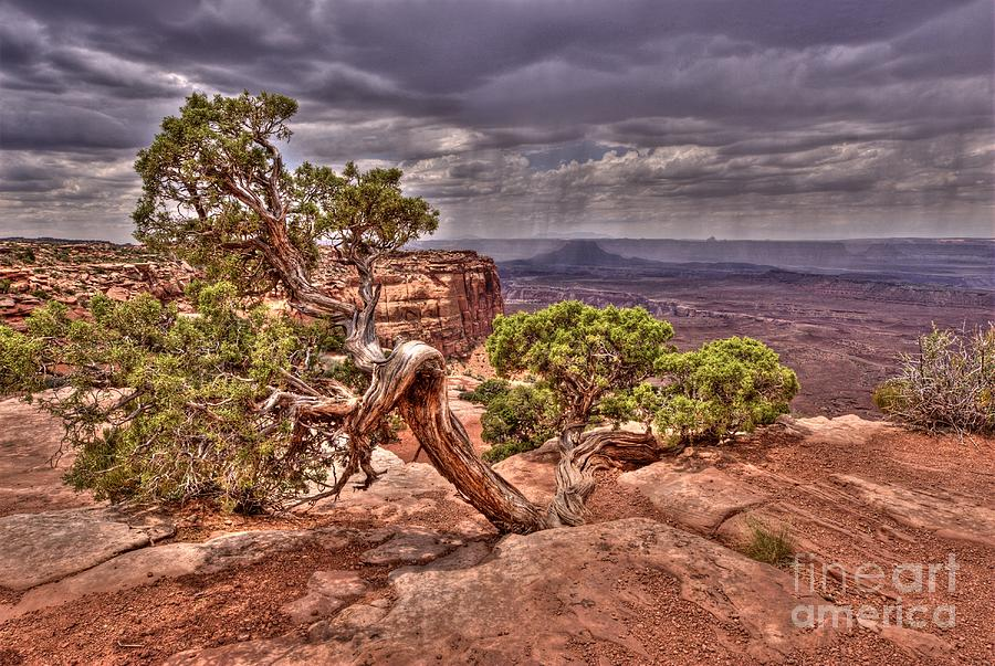 Juniper Tree Photograph - Junipers Storm by John Kelly