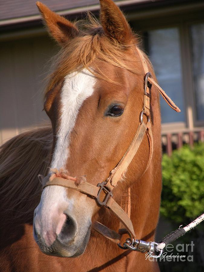 Horse Photograph - Just A Face by Yumi Johnson