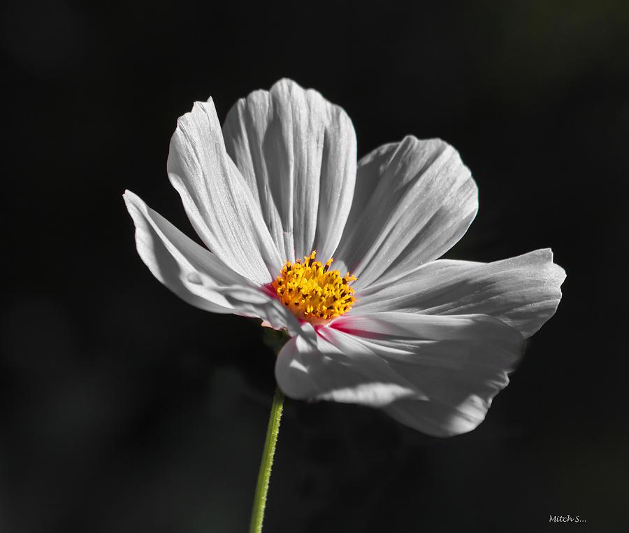 Flower Photograph - Just A Flower by Mitch Shindelbower