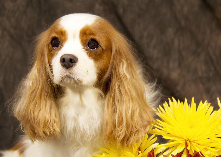 Dog Photograph - Just A Girl And A Flower by Daphne Sampson