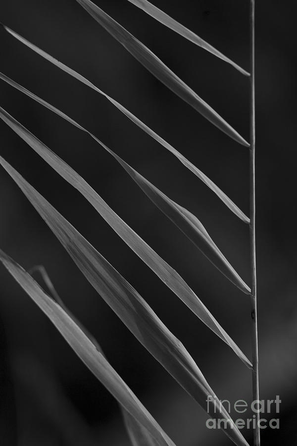 Nature Photograph - Just Grass Bw by Heiko Koehrer-Wagner