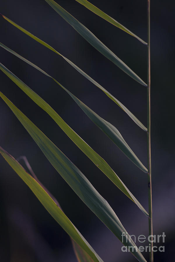 Nature Photograph - Just Grass by Heiko Koehrer-Wagner