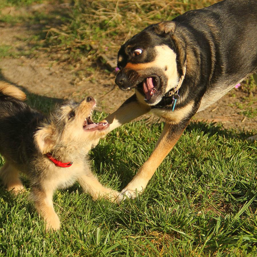 Dogs Photograph - Just Playin by PMG Images