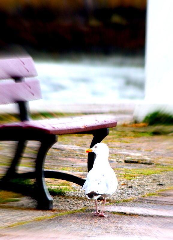 Bird Photograph - Just Strolling by Amanda Pillet