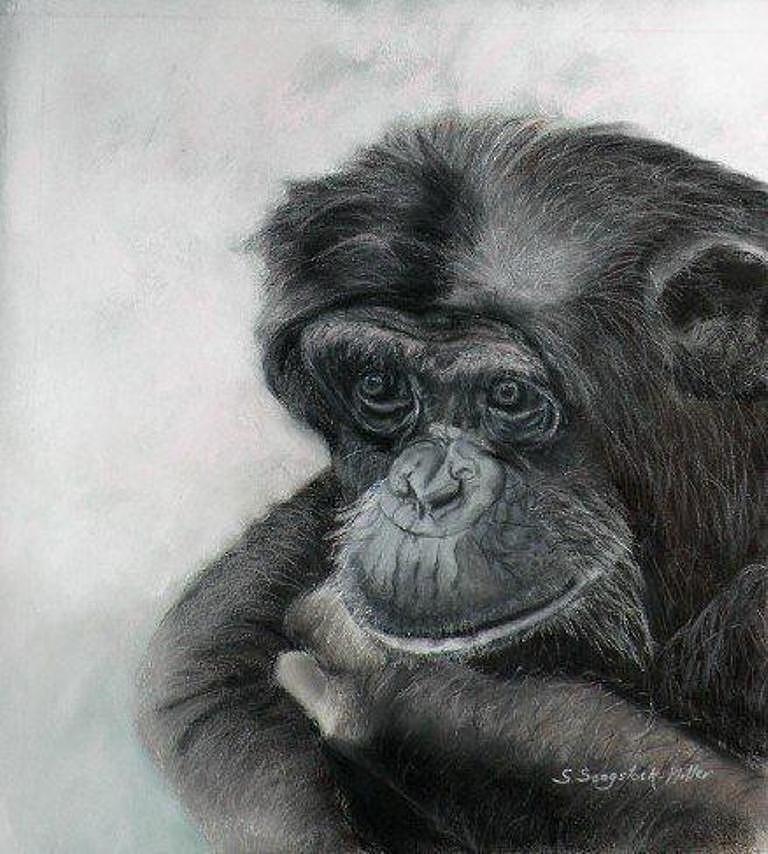 Chimpanzee Pastel - Just Thinking by Sandra Sengstock-Miller
