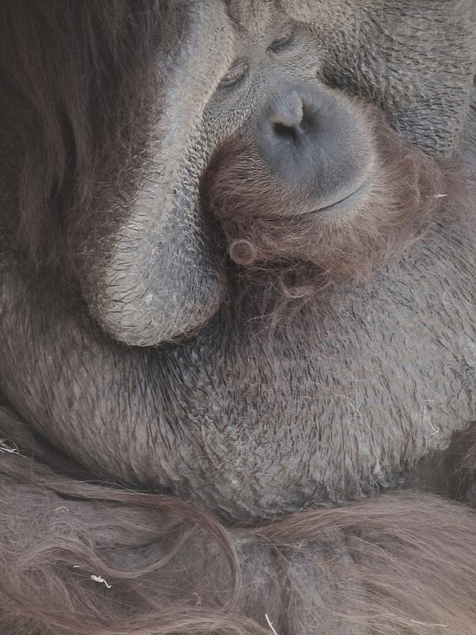 Monkey House Photograph - Just Thinking by Todd Sherlock