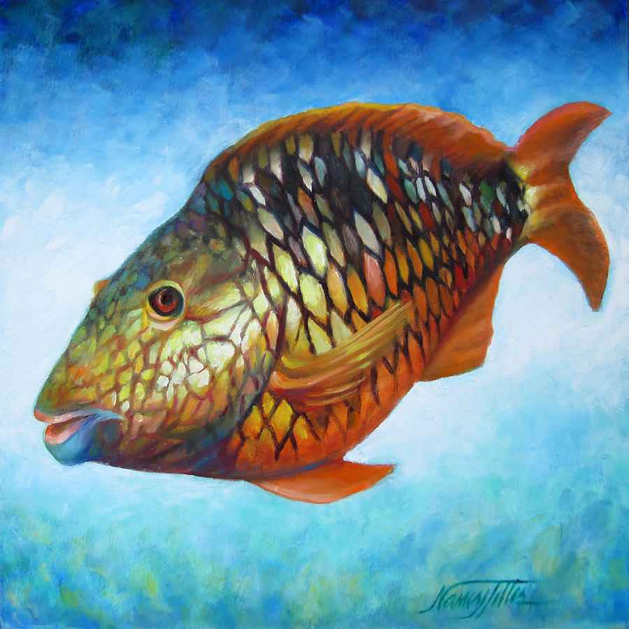 Juvenile parrot fish painting by nancy tilles for Pictures of parrot fish