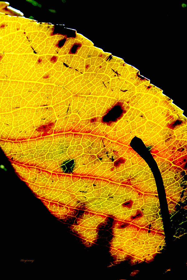 Foliage Photograph - Kaleidoscope by Ken Young