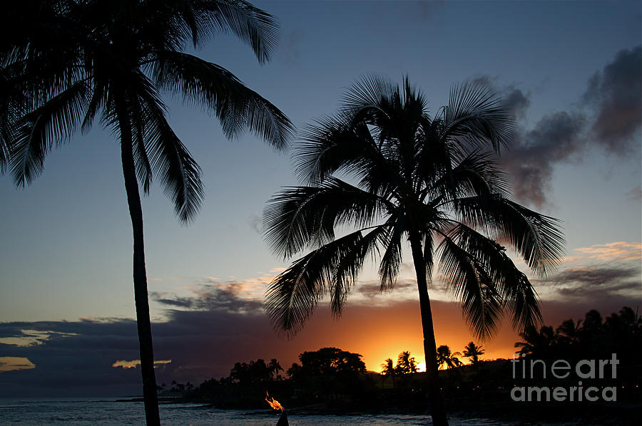 Kauai Hawaii Palm Tree Sunset Photograph By ELITE IMAGE