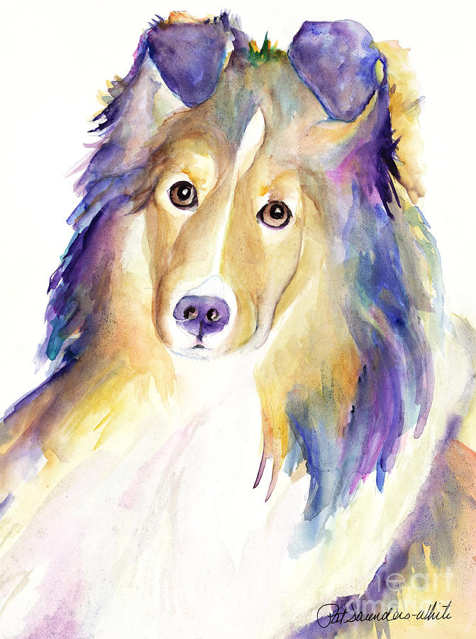 Sheltie Painting - Kelly by Pat Saunders-White