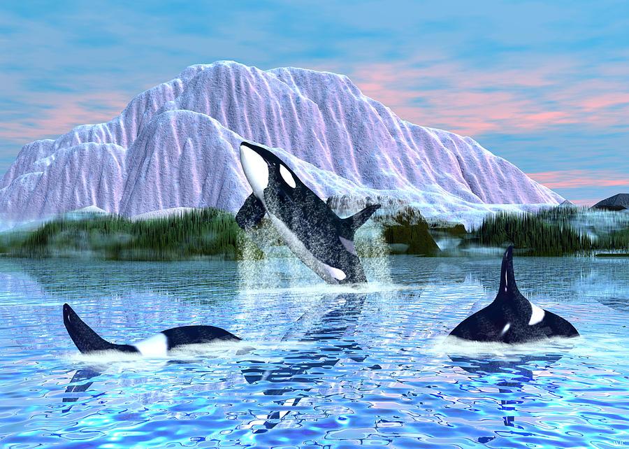 Killer Whale Digital Art - Killer Whales by Walter Colvin