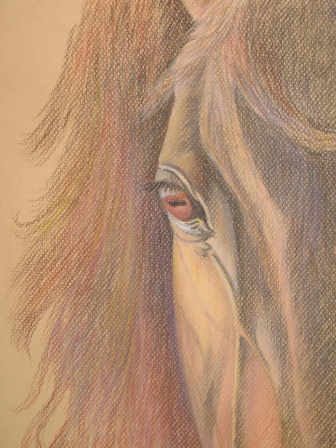 Horse Painting Painting - Kind Eye by Stephanie L Carr