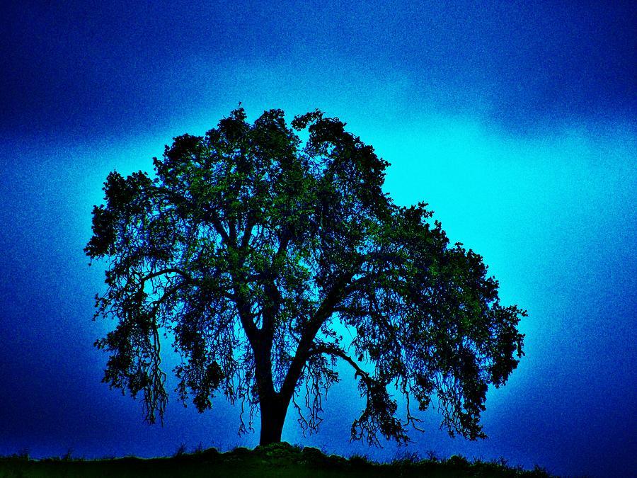 Oak Photograph - King Oak by Helen Carson