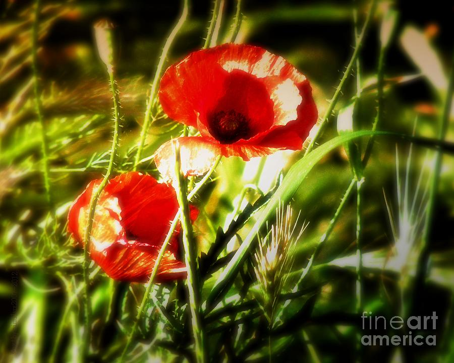 Poppy Photograph - Kissed By The Setting Sun by Mimulux patricia No