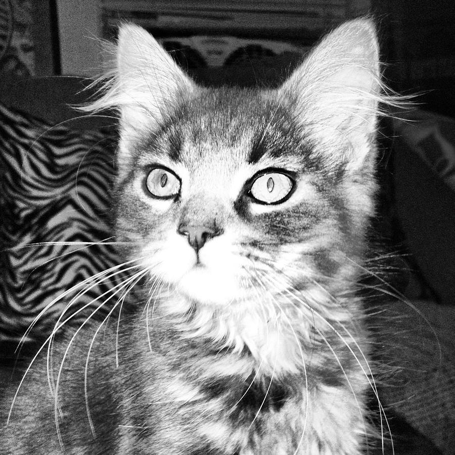 Kitten Photograph by Angela Garrison