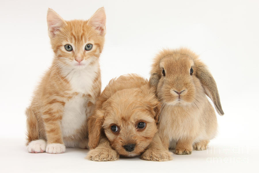 Kitten, Puppy And Rabbit Photograph by Mark Taylor