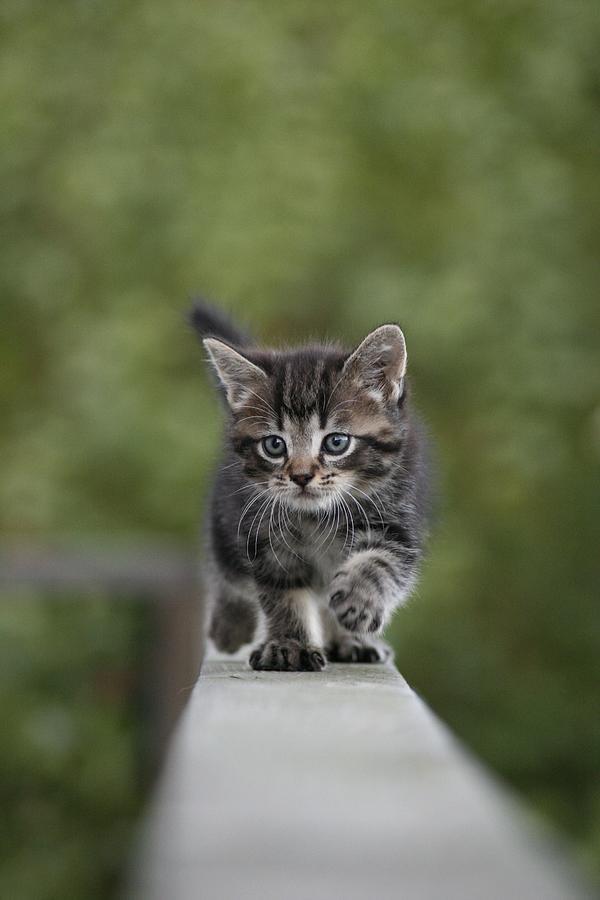 Kitten Photograph - Kitten Run by Katarina Risell