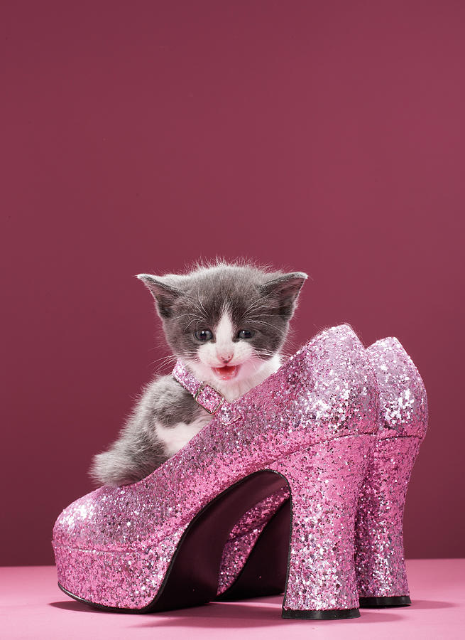 Vertical Photograph - Kitten Sitting In Glitter Shoes by Martin Poole