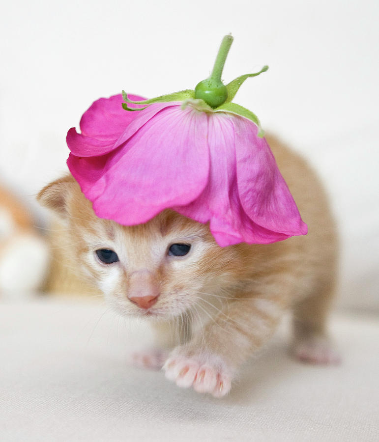 Vertical Photograph - Kitten Walking With Flower Hat by Sanna Pudas
