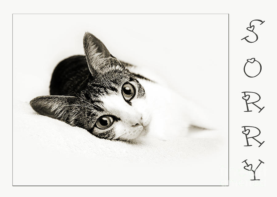 Cat Photograph - Kitty Cat Greeting Card Sorry by Andee Design