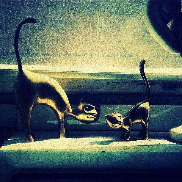 Ny Photograph - Kitty Cats by Natasha Marco
