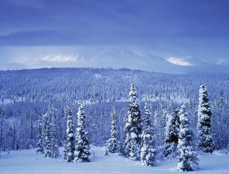 Kluane National Park Winter Yukon Photograph By Darwin