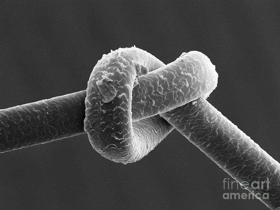 Knot In Human Hair Sem Photograph By Ted Kinsman