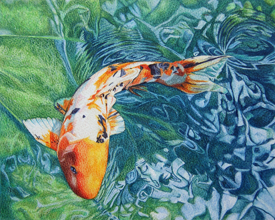 Koi carp drawing by abby hope skinner for Large koi carp