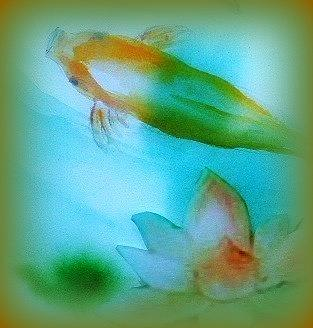 Koi  Mood  Soft Today Painting by Wendy Wiese