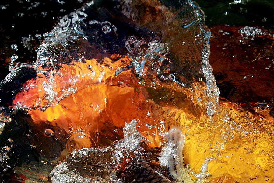 Abstract Photograph - Koi Oasis by Elizabeth Hart